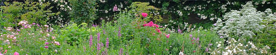 バラ咲く庭の物語